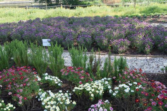Jard n de las plantas arom ticas foto de parque - Jardin de aromaticas ...