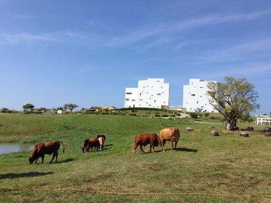 Ocean Paradise Resort: 海境渡假民宿 主建築