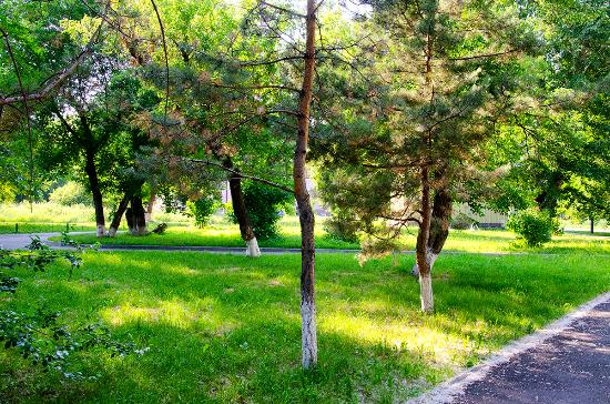 Pharmaceutic Garden