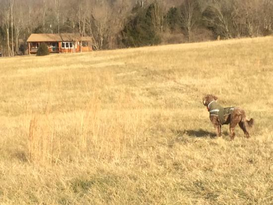 Rileyville, Wirginia: Our dog loves the fields, looking back toward the house