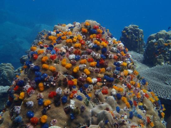 Ko Tao Diving Tour - Buddha View Dive Resort: クリスマスツリー!