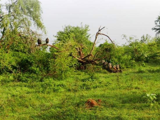 deers running to hide picture of udawalawe national. Black Bedroom Furniture Sets. Home Design Ideas