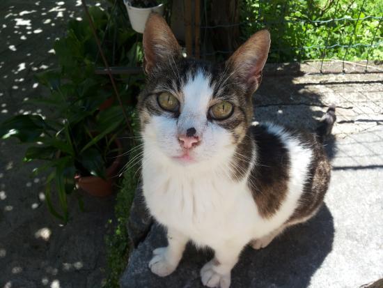 Osteria Vallebona : la gatta!