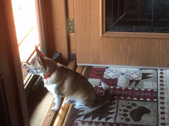 Talkeetna Denali View Lodge & Cabins: Paco the house dog and part of welcoming crew.