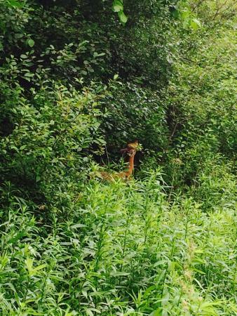 Whitnall Park: Deer in the park
