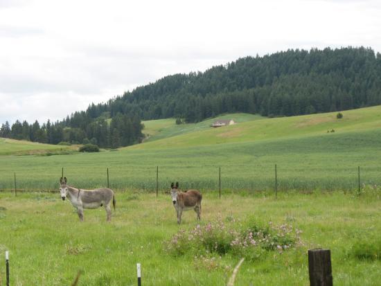 Latah Trail Bike Path: Farmland along the way