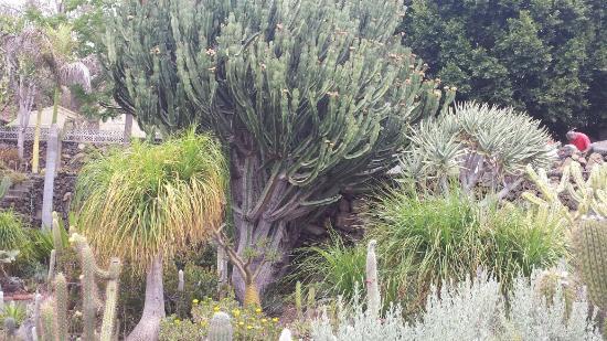 Palmex Cactus Trees