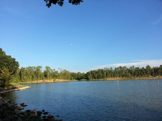 Livingston (TX) United States  city photos gallery : ... Picture of Lake Livingston State Park, Livingston TripAdvisor