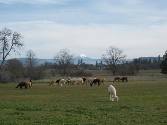 White City, OR : Beautiful spring day with Mr. McLoughlin in the background