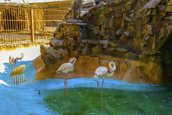 Hurghada Grand Aquarium : Hurghada Grand Aquarium - Picture of Hurghada Grand Aquarium, Hurghada ...