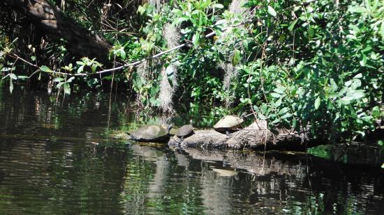 Turkey Creek Nature Trail : water turtles