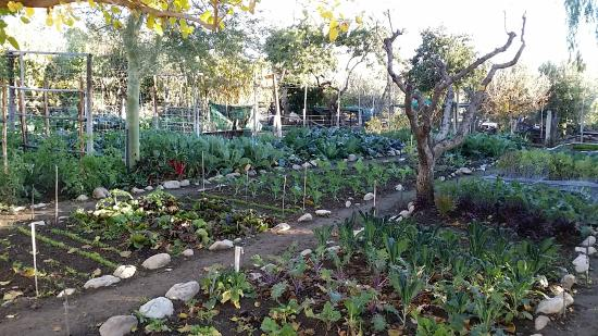 Karoo Khaya: Vegetable Gardens