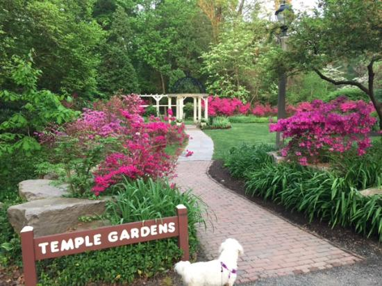 Dog walking at the Temple Gardens - Picture of Sayen House and ...