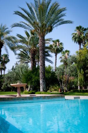 Dar Ayniwen Villa Hotel: gardens&Pool
