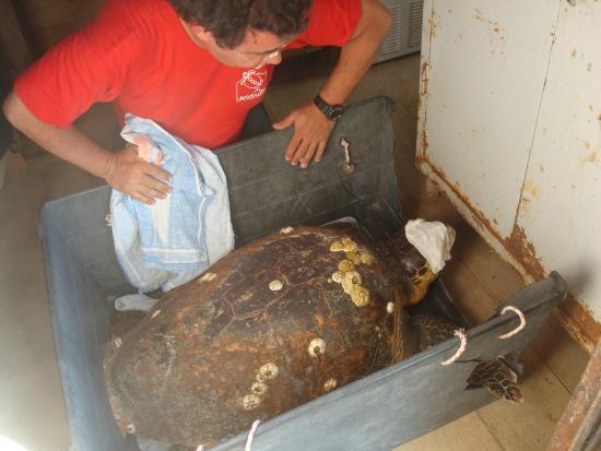 Urgence - Picture of Sea Turtle Rescue Centre, Glyfada ...