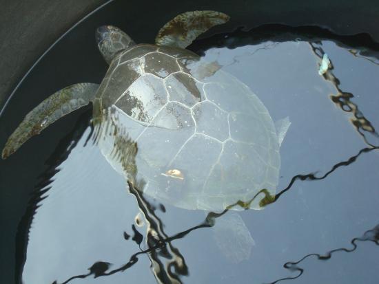 Piscine - Picture of Sea Turtle Rescue Centre, Glyfada ...