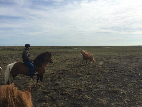 "Hella Horse Rental: Joined by ""wild"" horses"