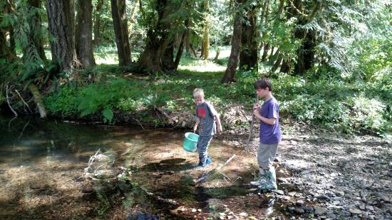 Alsea, Όρεγκον: The creek offered all sorts of fun for children!