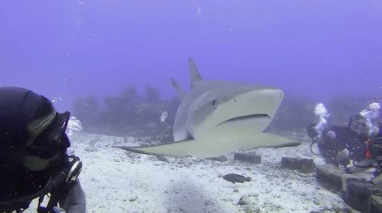 Симпсон-Бей, Сен-Мартен – Синт-Мартен: Shark Dive with Ocean Explorers