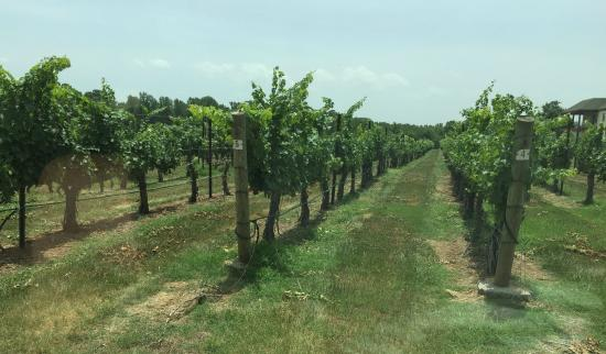 RayLen Vineyards: RayLen Vineyard