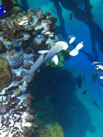 Such A Beautiful Place Picture Of New England Aquarium Boston Tripadvisor