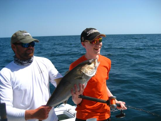 amberjack picture of gulf angler fishing charters