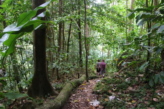 Forest Reserves Hikes