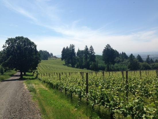 Triangle Wine Country Tours