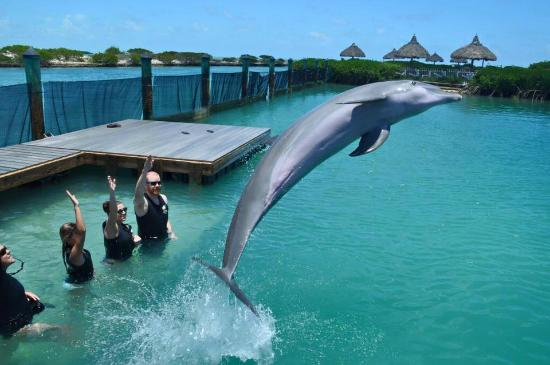 """Dolphin Connection : We gave the """"jump"""" sign!"""