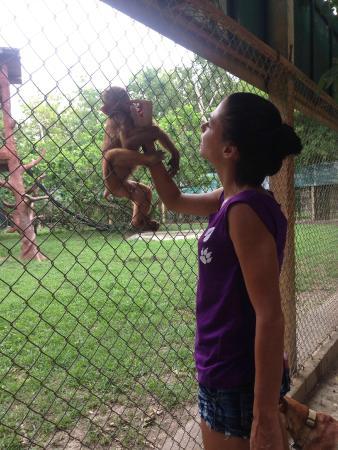 Gillende apen - Picture of Wildlife Friends of Thailand ...