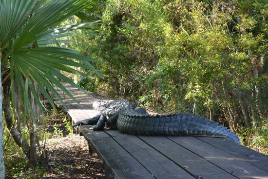 نيو أورلينز, لويزيانا: Хозяин болот