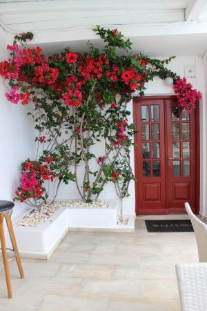 Domna Petinaros Apts Hotel Mykonos 사진