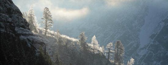 Columbia Falls, MT: Frosty trees get first light on a ridge above Avalanche Lake.