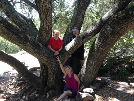 Bartholomew Park Winery: Great spreading tree that shaded our tables