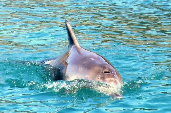 Tandarra Lodge Kangaroo Island : Dolphins feed their young close to the beach