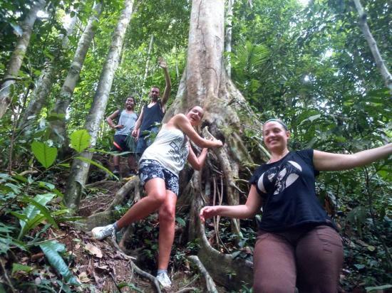 Picture Of Bukit Lawang Jungle
