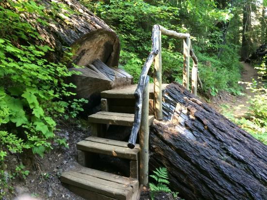 Sisters, OR: Stairs built for crossing an especially huge fallen tree.
