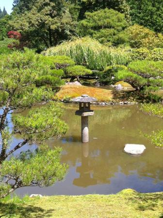 Large koi pond with pagoda picture of seattle japanese for Koi pool opening times