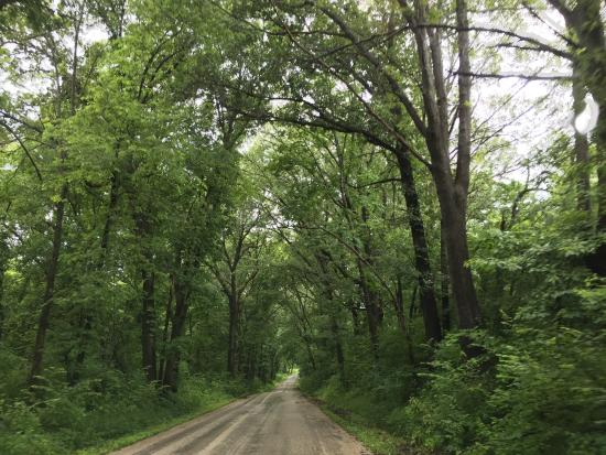 Rochester, Илинойс: Beautiful Trees on the road in and out