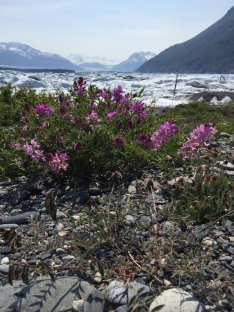 Alaska All Terrain Tours - Day Tours: Beautiful day at Knik Glacier