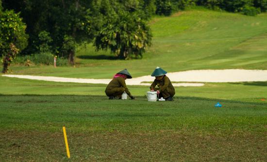 Laguna Bintan Golf Club: maintenance