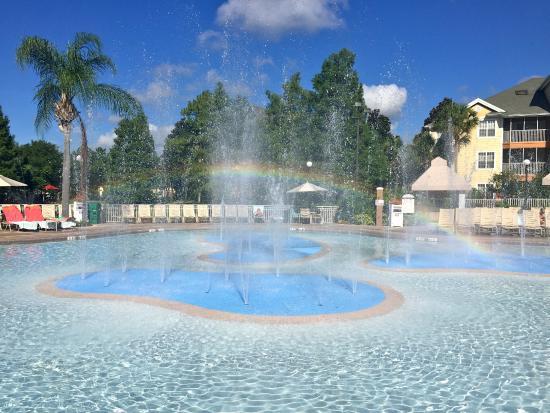 Cascades pool picture of sheraton vistana resort lake for Pool show orlando 2015