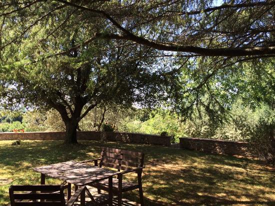 Agriturismo Tesorino : Giardino ombreggiato davanti alla camera