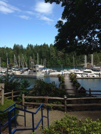 Shelton, WA: Beautiful Jarrell's Cove Marina...