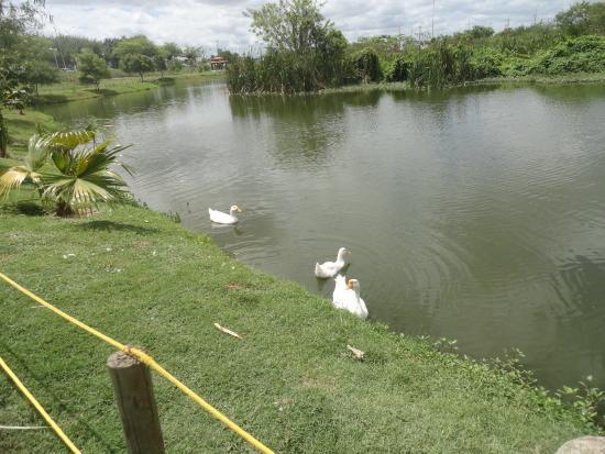 Feira de Santana, BA: Lago