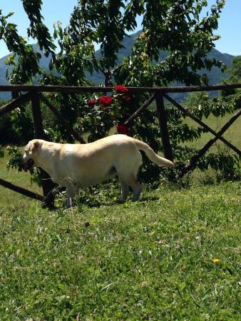 Agriturismo Santa Serena: Luna
