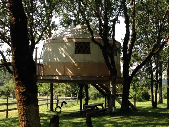 Out 'n' About Treehouse Treesort: Yurt Tree