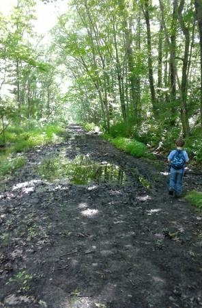 Airline State Park Trail: A few wet spots after rain.. exist specially from Pomfret to Putnam