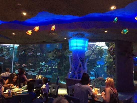 Aquarium Restaurant Picture Of Aquarium Restaurant