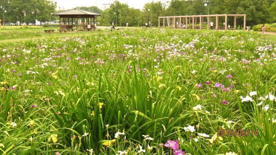 Beppunuma Park